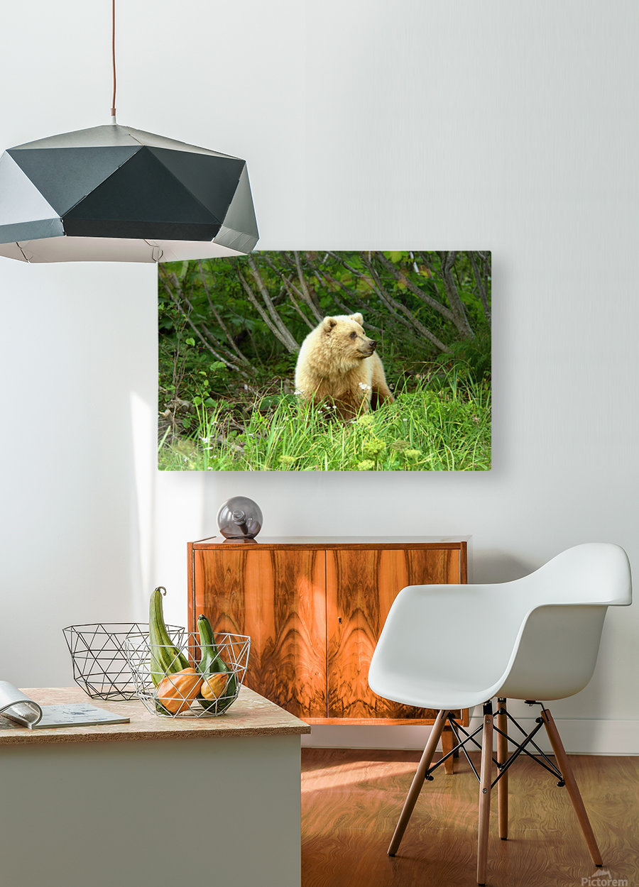 Two Year Old Grizzly  HD Metal print with Floating Frame on Back