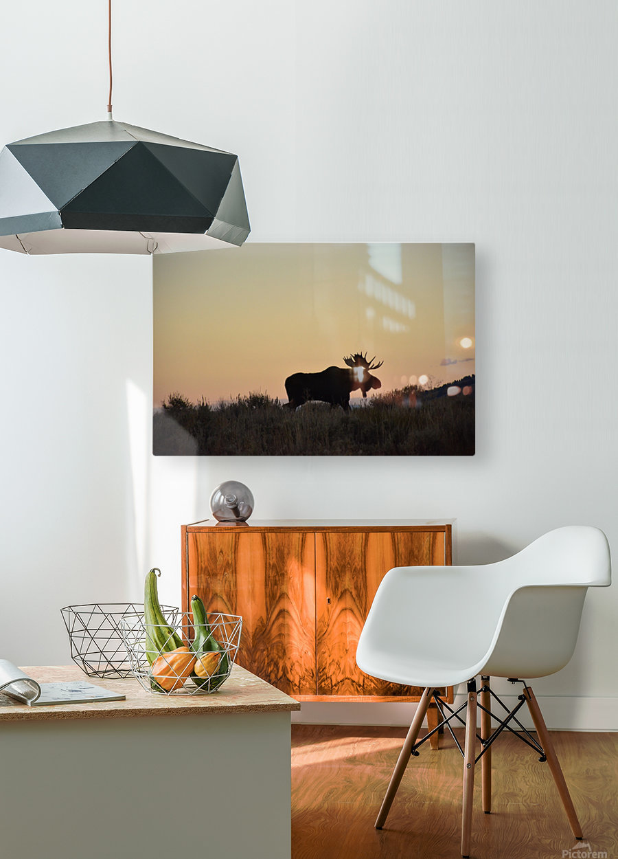 On the move  HD Metal print with Floating Frame on Back