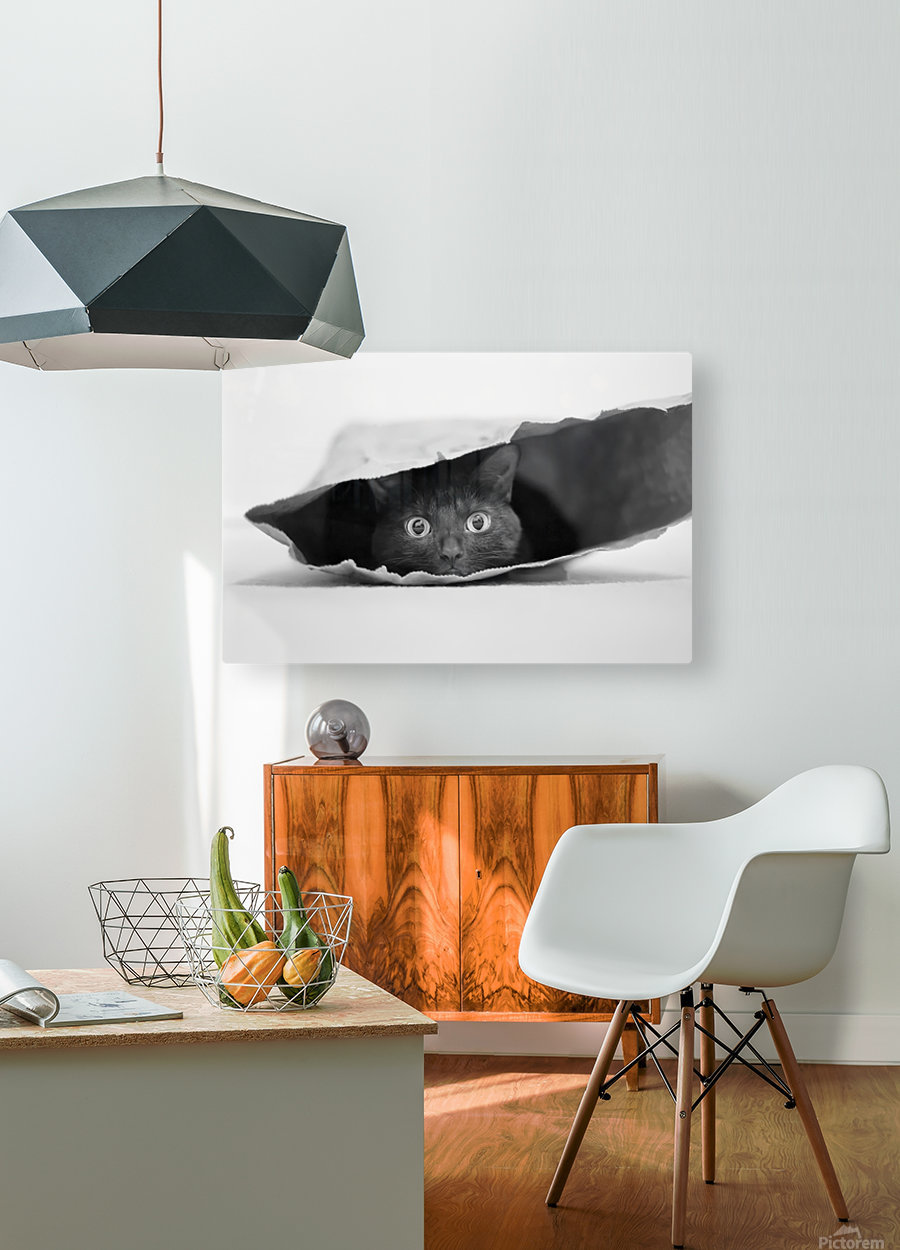 Cat in a bag  HD Metal print with Floating Frame on Back
