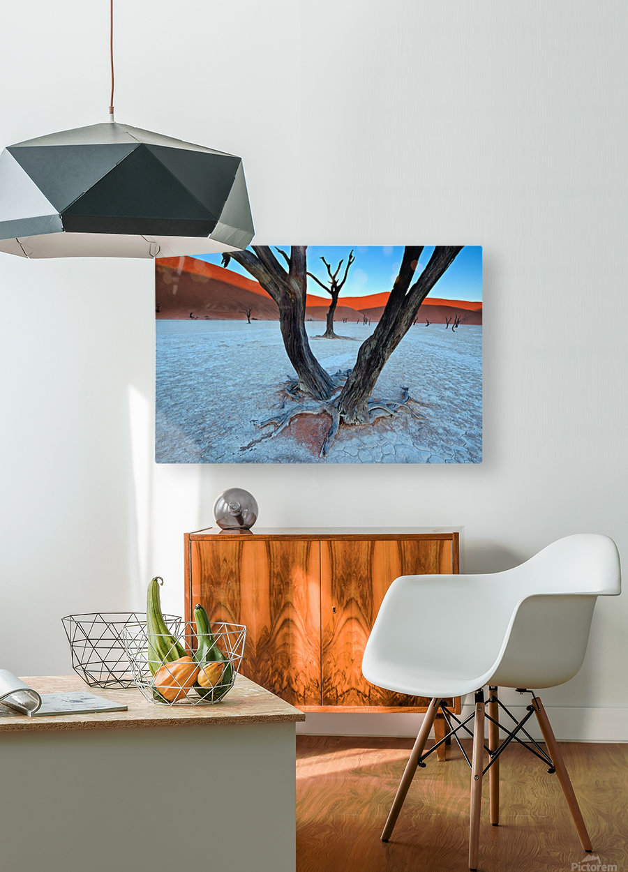 Ancient trees in the Vlei  HD Metal print with Floating Frame on Back