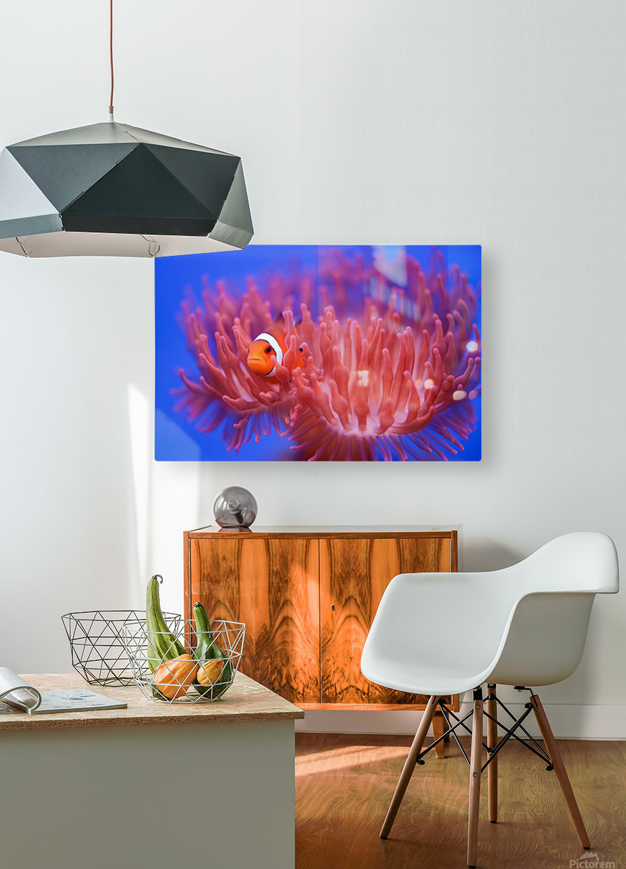 Finding Nemo  HD Metal print with Floating Frame on Back