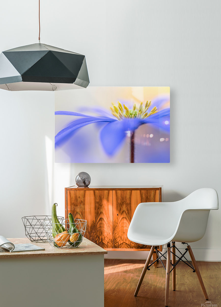 Pure ...  HD Metal print with Floating Frame on Back