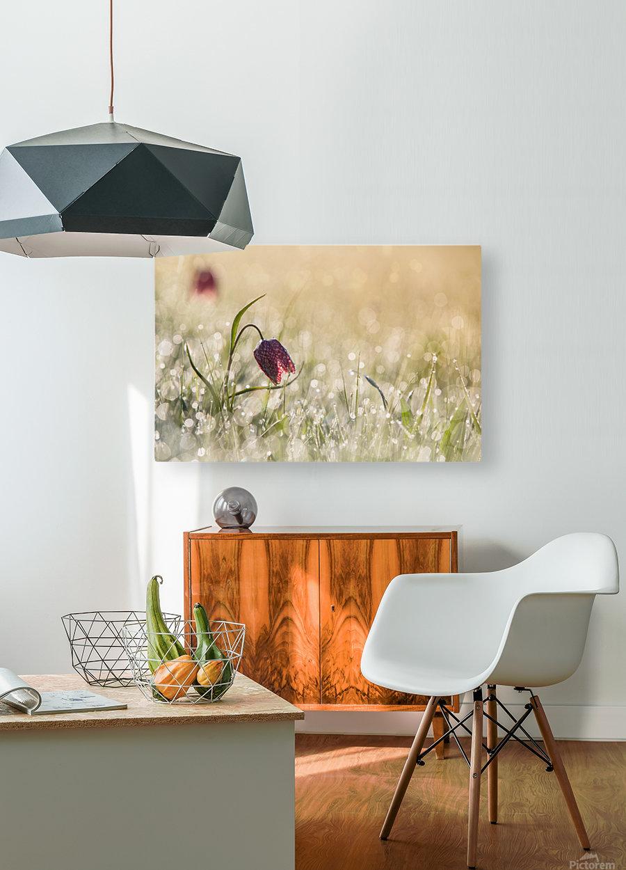 Morningdew  HD Metal print with Floating Frame on Back