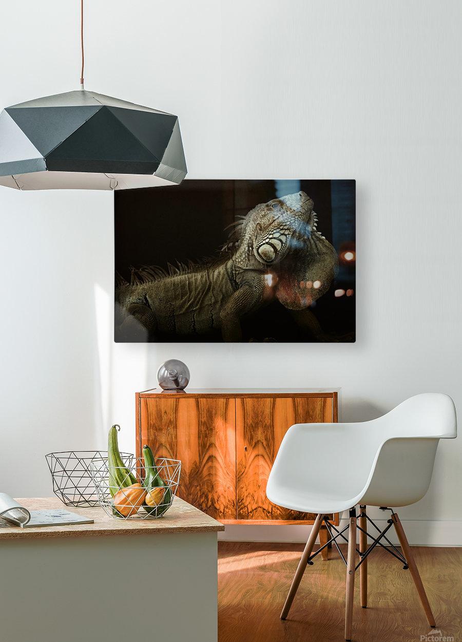 Iguana profile  HD Metal print with Floating Frame on Back