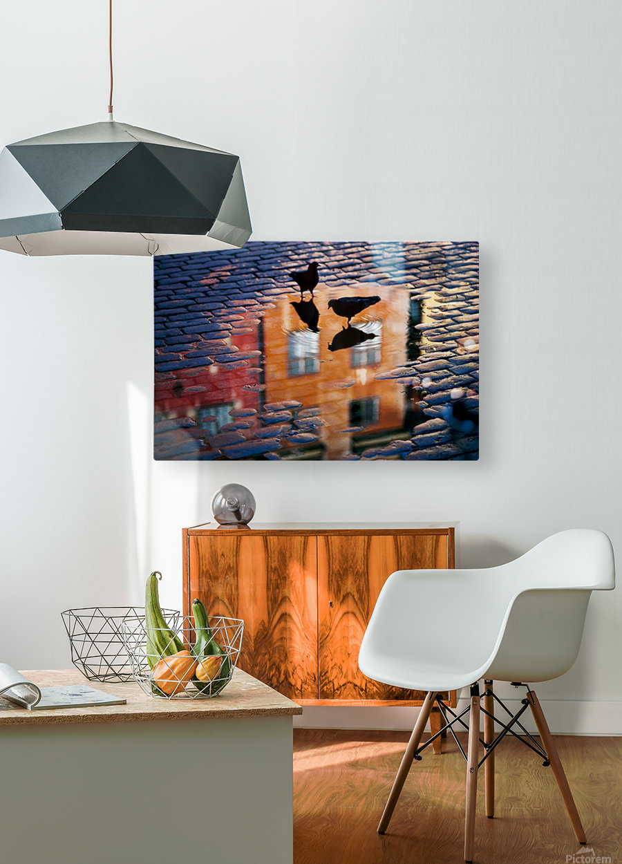 Pigeons  HD Metal print with Floating Frame on Back