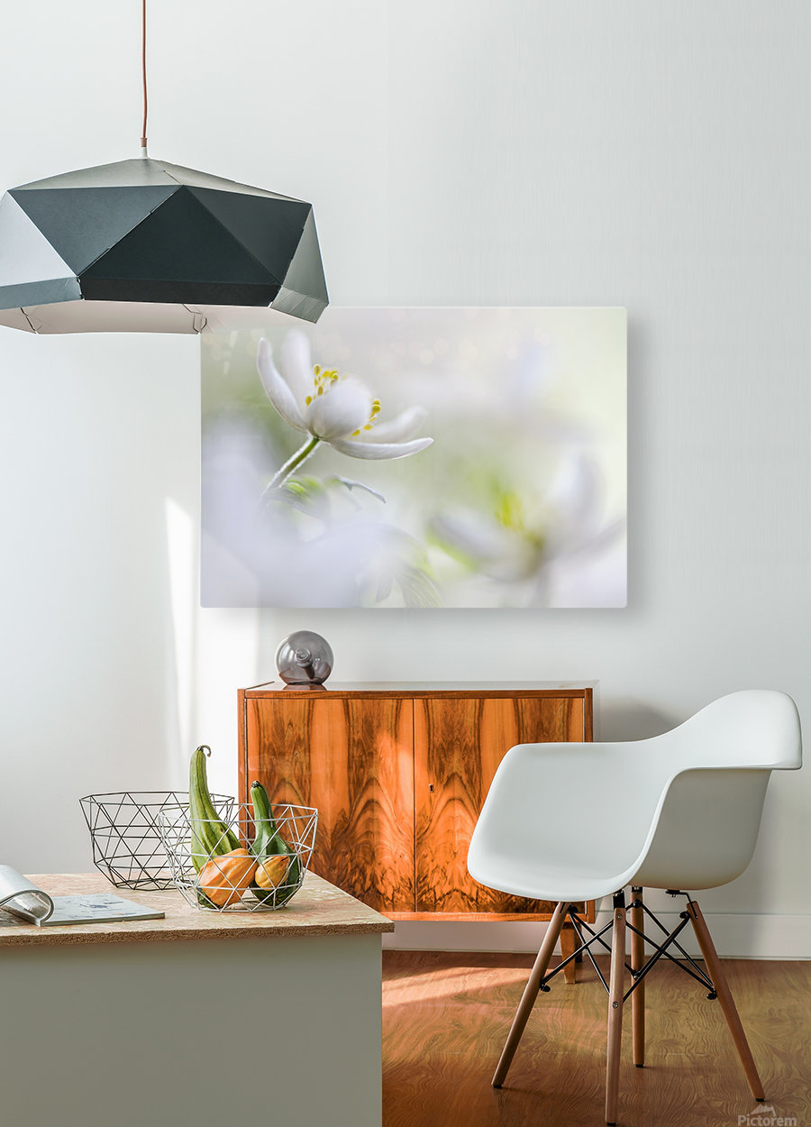 White Spring  HD Metal print with Floating Frame on Back
