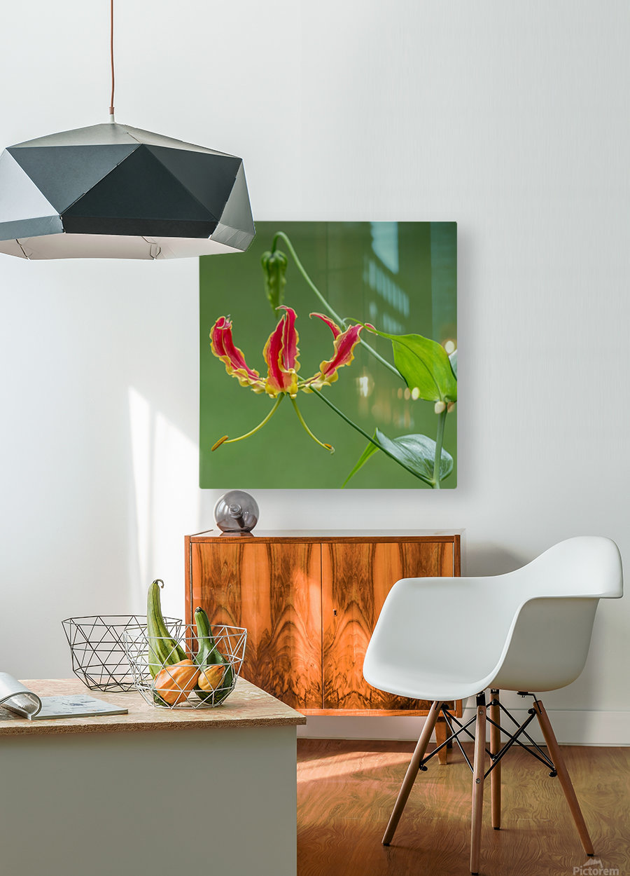 Flame Flower   HD Metal print with Floating Frame on Back