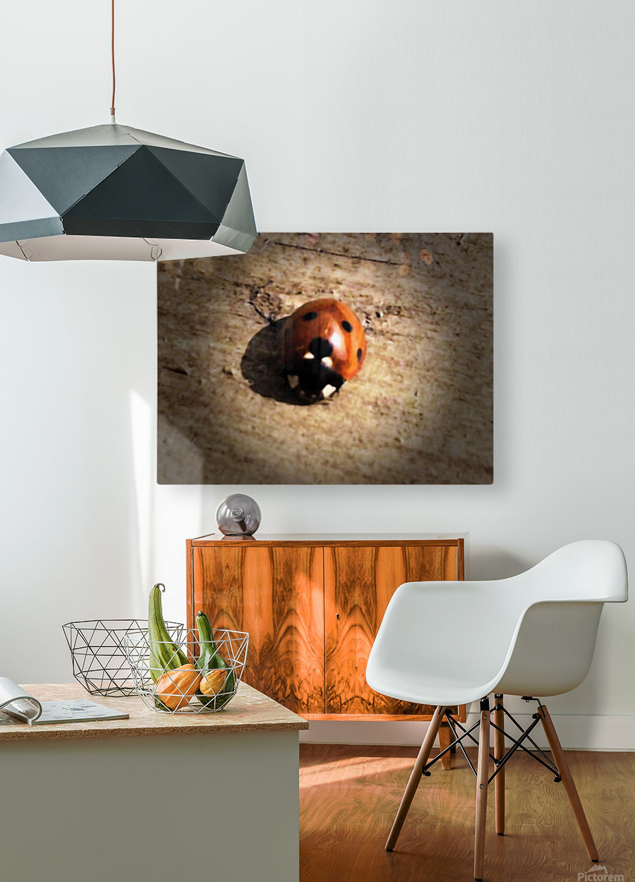 Lady Bird Bug  HD Metal print with Floating Frame on Back