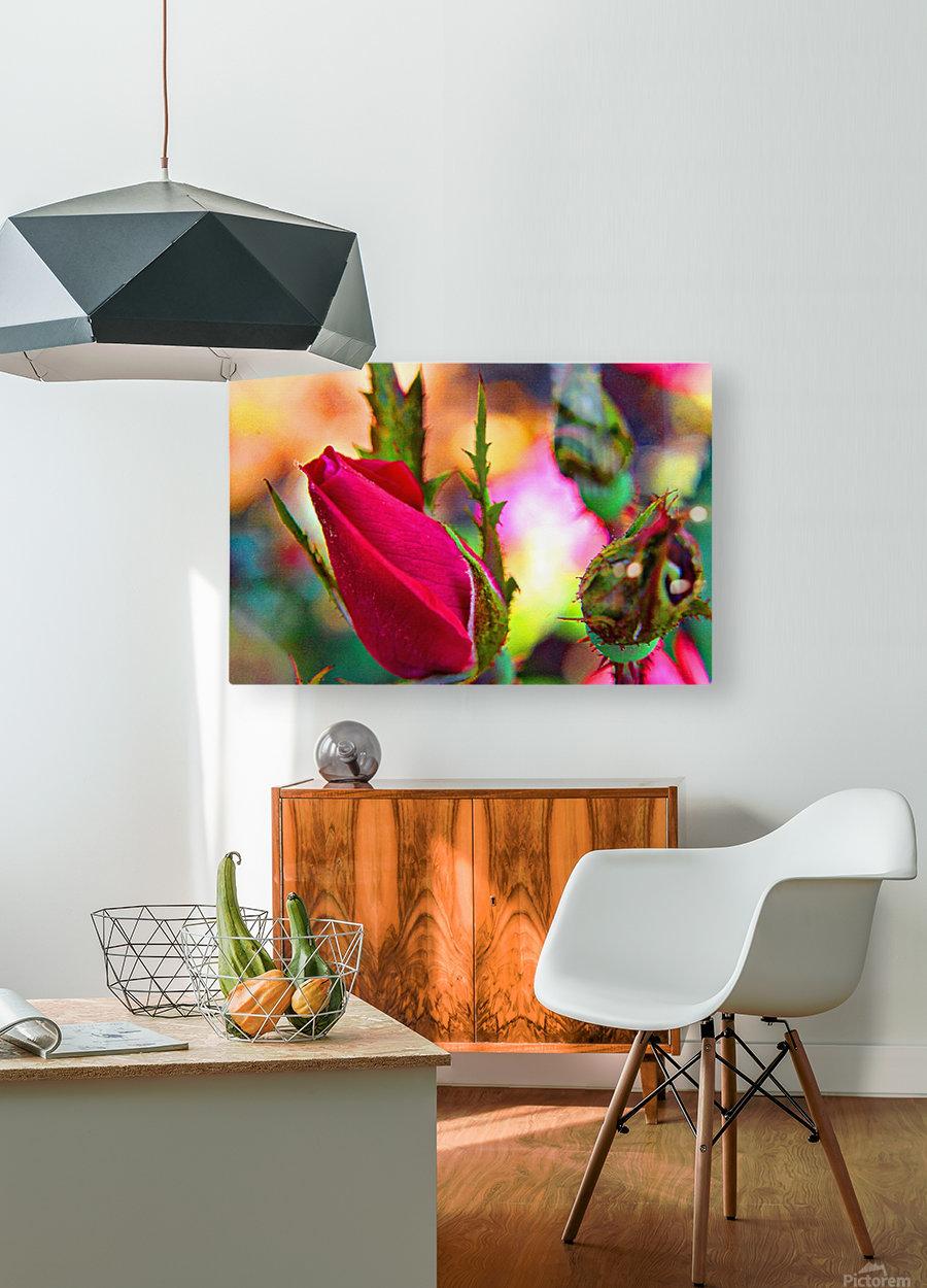Rosebud  HD Metal print with Floating Frame on Back