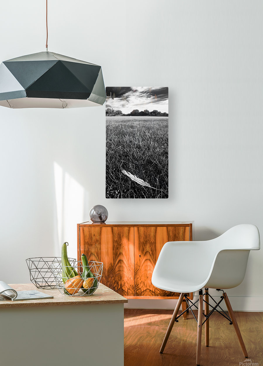 Feather in the Grass  HD Metal print with Floating Frame on Back