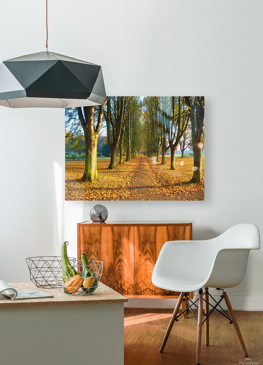 Autumnal Avenue  HD Metal print with Floating Frame on Back