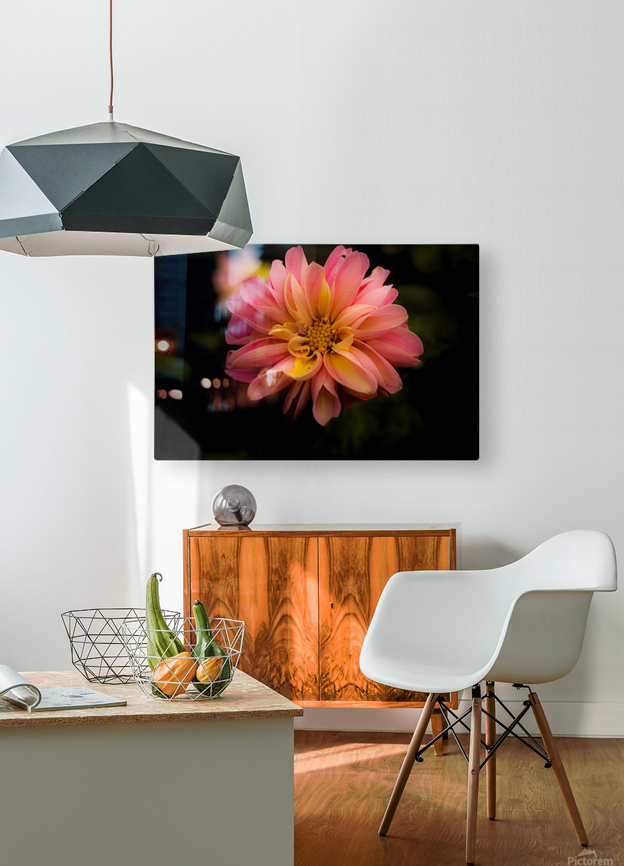 Dahlia   HD Metal print with Floating Frame on Back