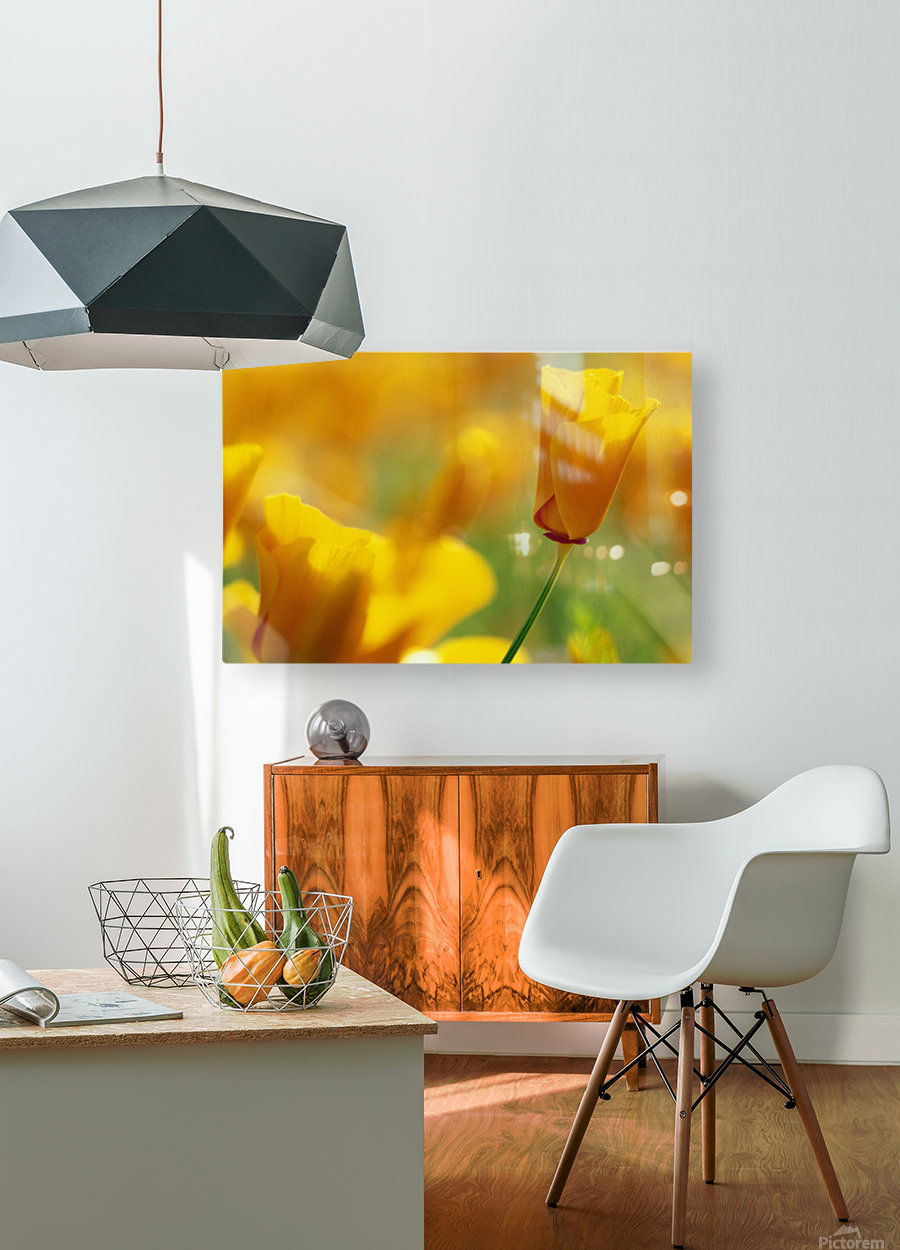 Yellow Poppy  HD Metal print with Floating Frame on Back