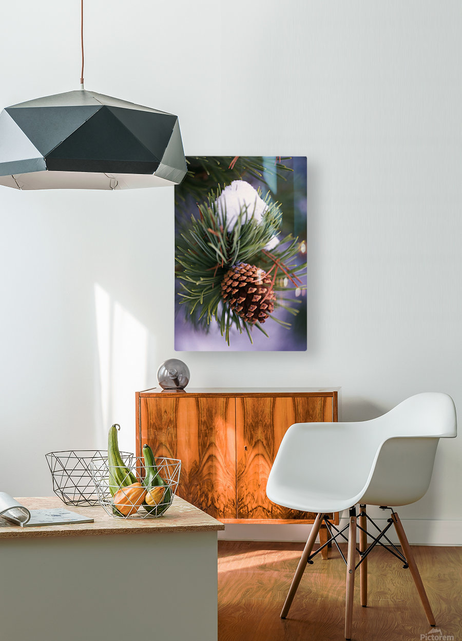 Early Snow On Pine Tree Branch With Pinecone  HD Metal print with Floating Frame on Back
