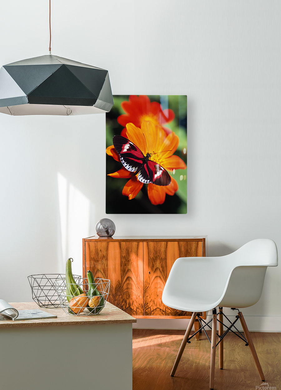 Butterfly On Flower  HD Metal print with Floating Frame on Back