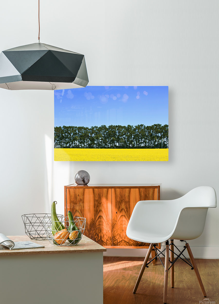 Canola Field And Trees  HD Metal print with Floating Frame on Back