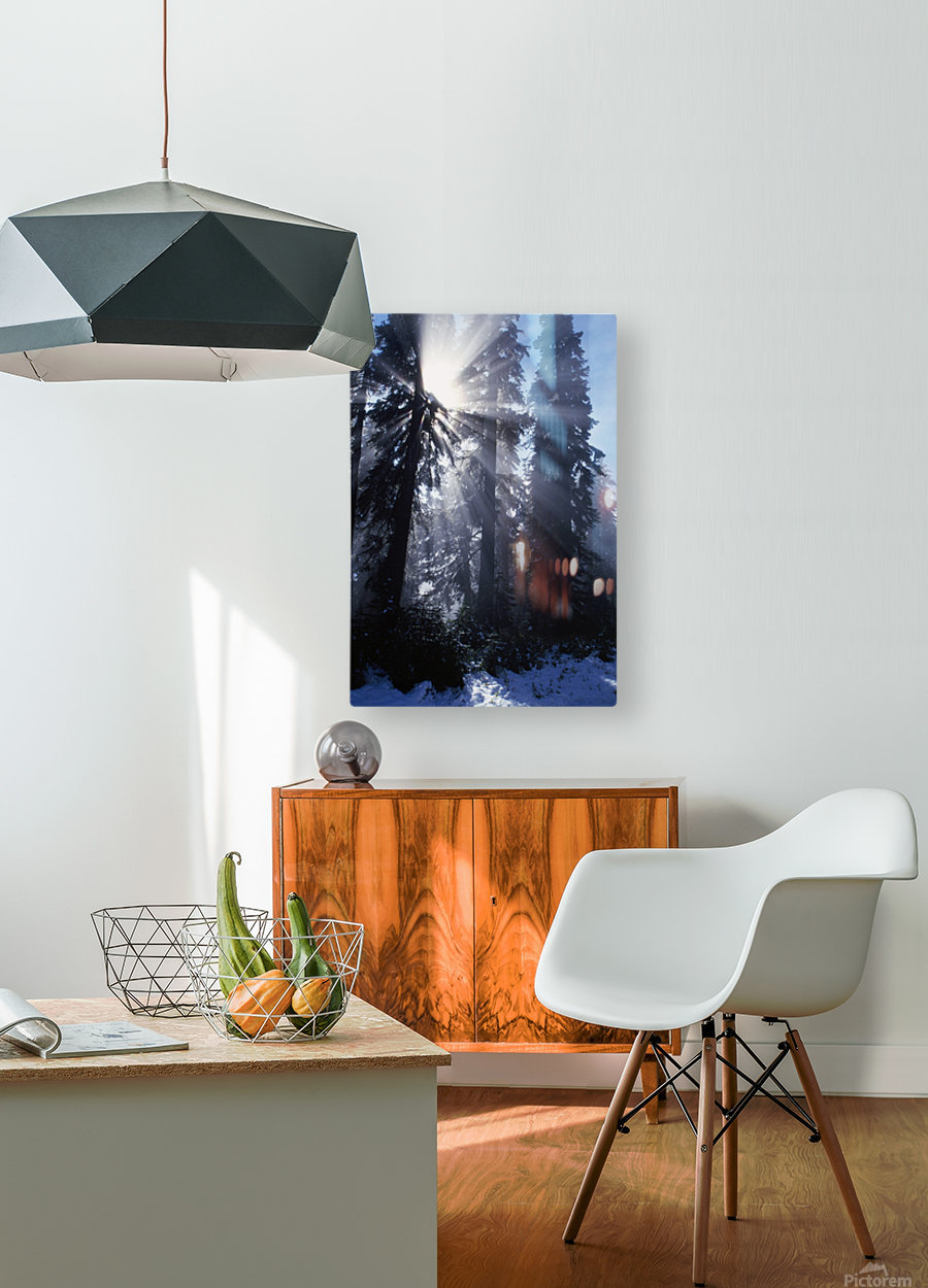 Sunbeams Through Pine Trees  HD Metal print with Floating Frame on Back