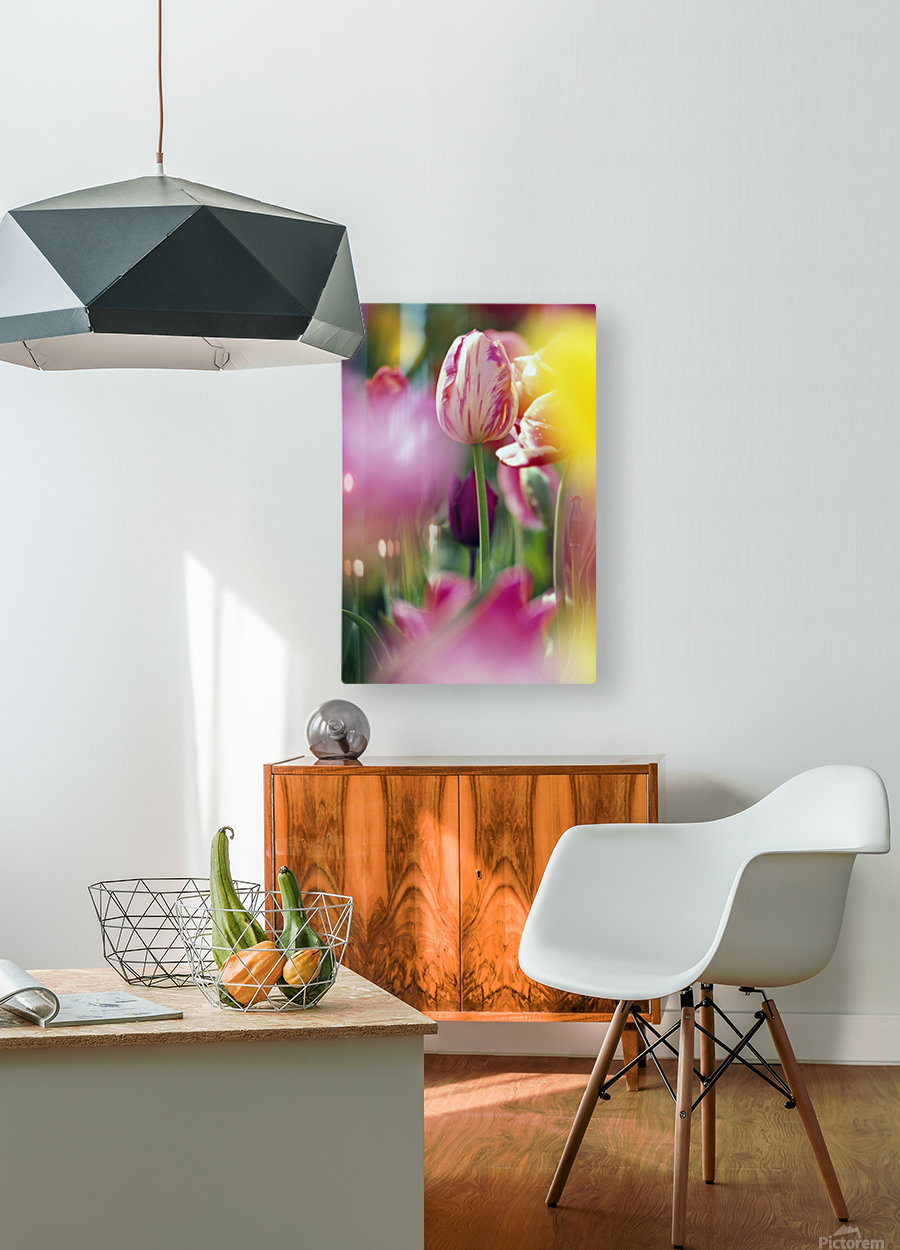 Tulip Flower  HD Metal print with Floating Frame on Back