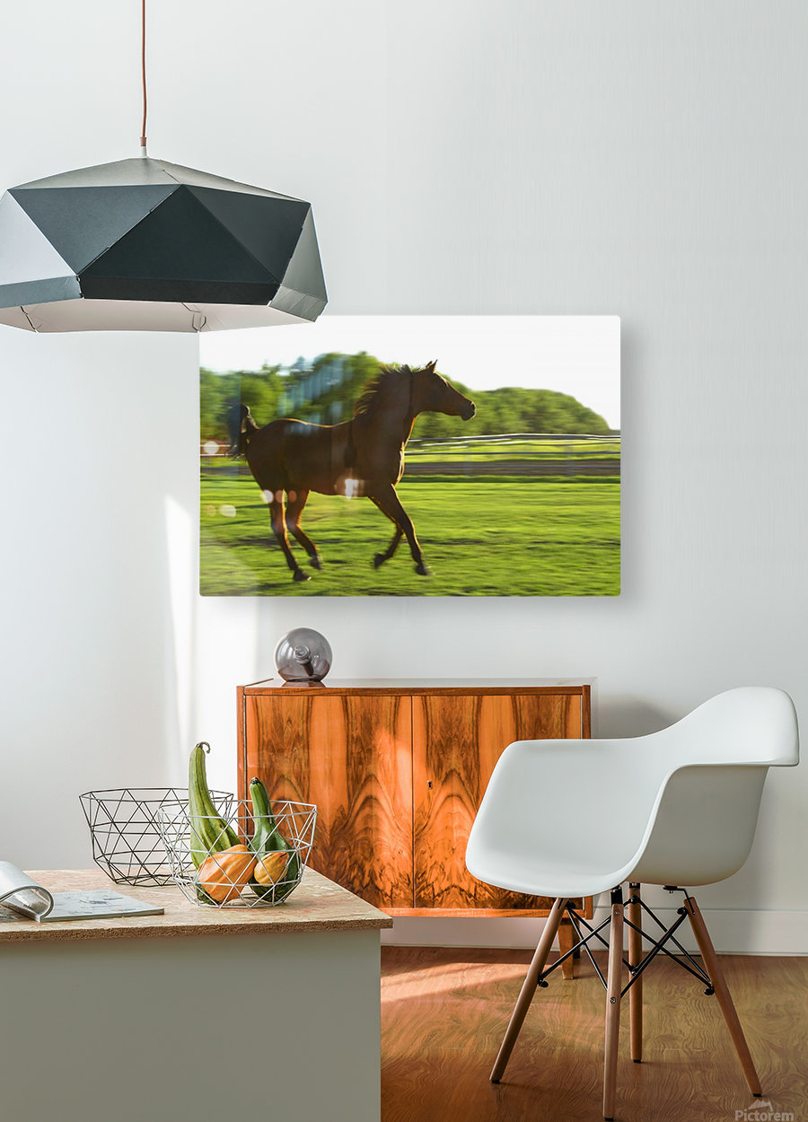 Horse Galloping  HD Metal print with Floating Frame on Back