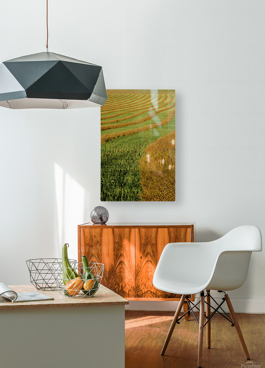 Rows Of Canola Windrows  HD Metal print with Floating Frame on Back