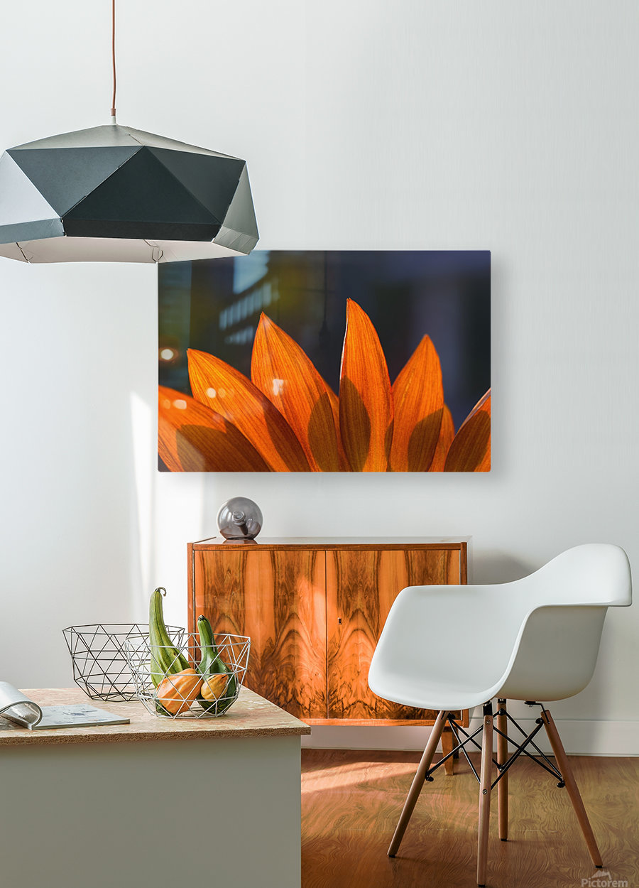 Sunflower Close-Up  HD Metal print with Floating Frame on Back