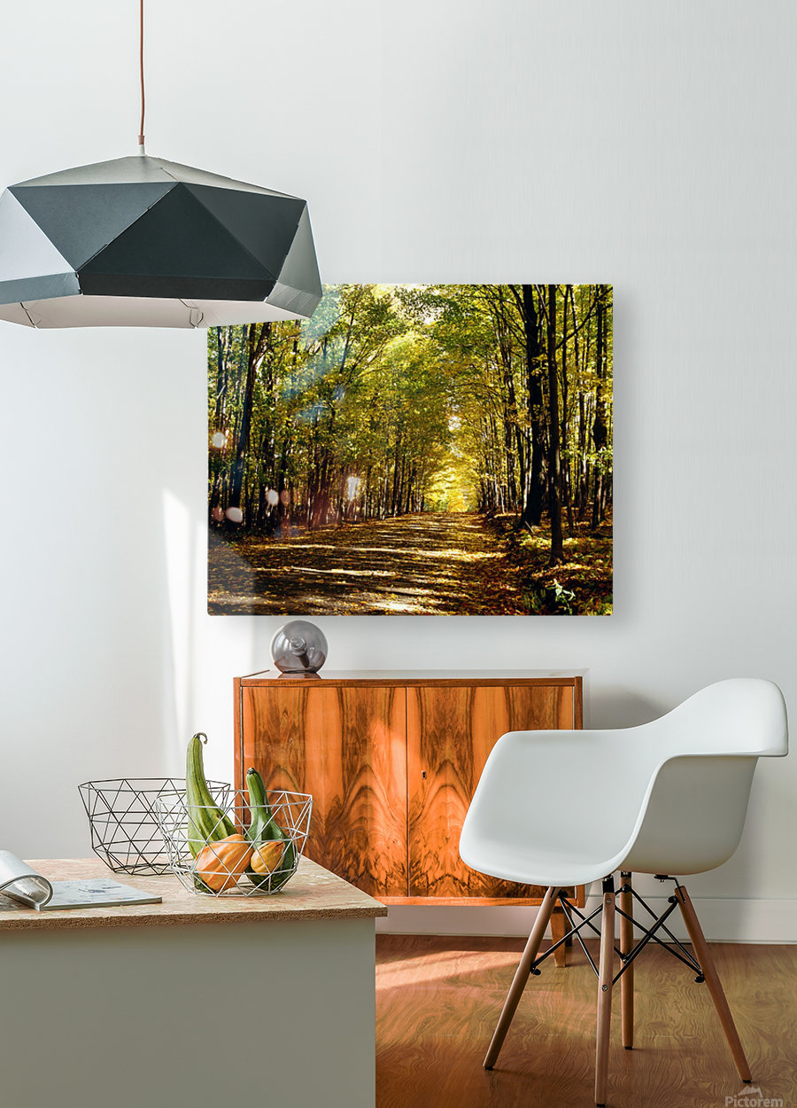 Tree Lined Road In Autumn  HD Metal print with Floating Frame on Back