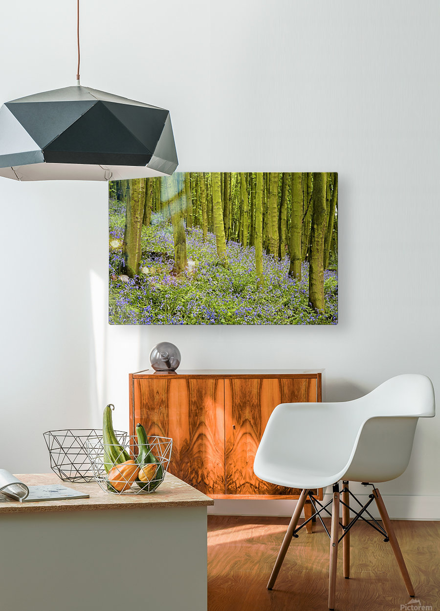 Bluebell Wood Impression  HD Metal print with Floating Frame on Back