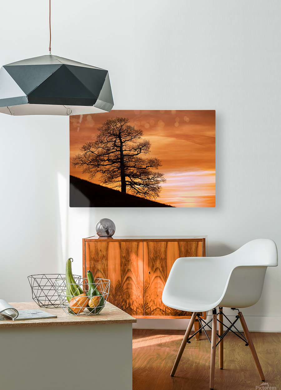 Tree Against A Sunset Sky, Nottinghamshire, England  HD Metal print with Floating Frame on Back