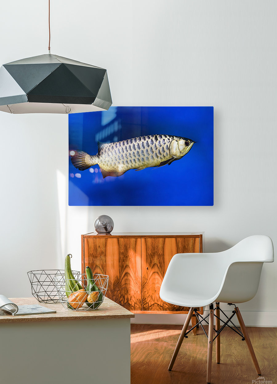 Fish  HD Metal print with Floating Frame on Back