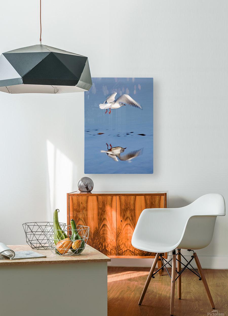Bird Landing  HD Metal print with Floating Frame on Back
