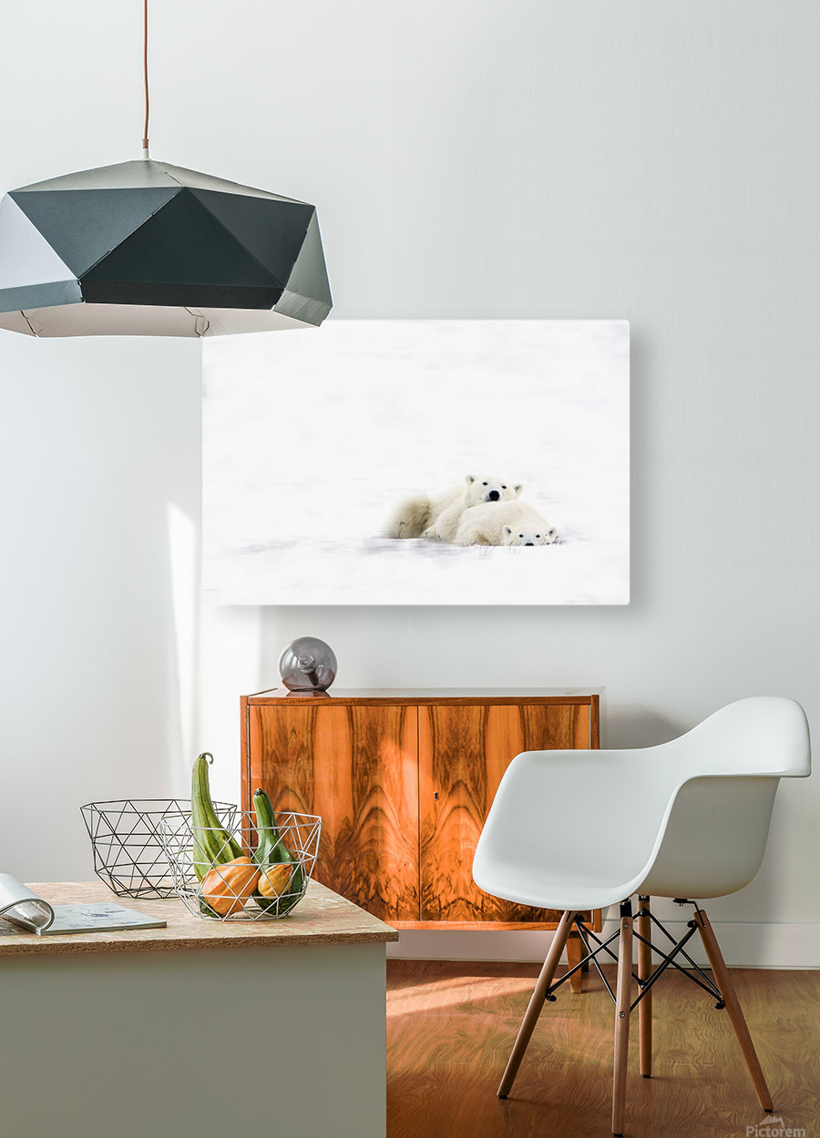 Two Polar Bears Snuggling  HD Metal print with Floating Frame on Back