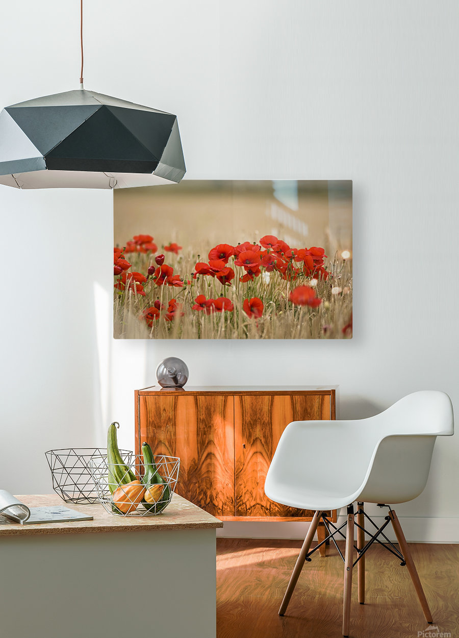 Poppies Growing Wild  HD Metal print with Floating Frame on Back