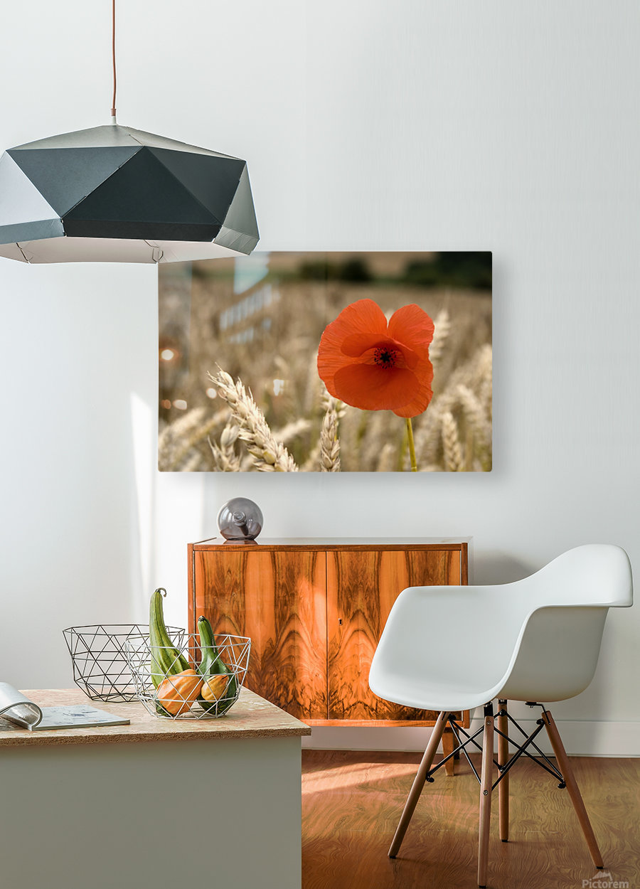 Red Flower In Field  HD Metal print with Floating Frame on Back