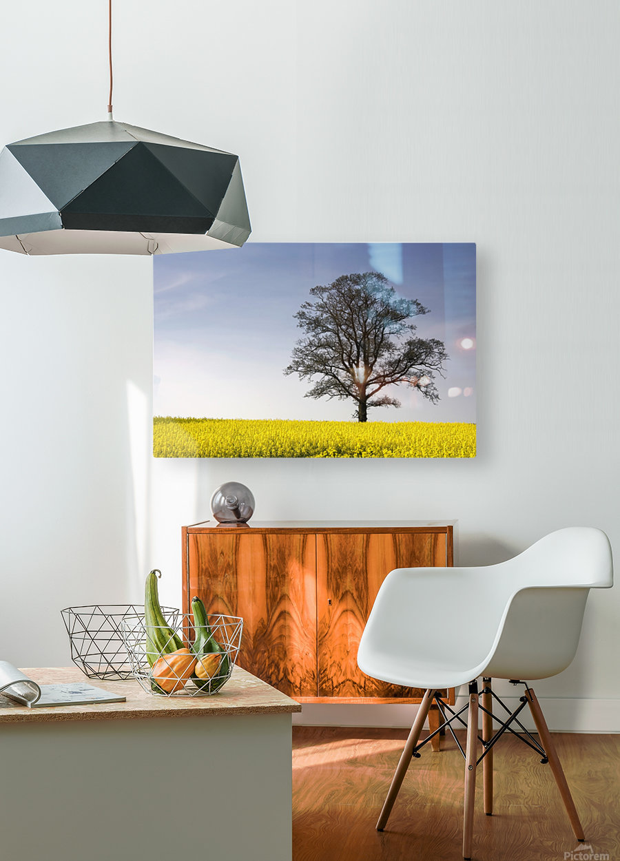 Tree In A Rapeseed Field, Yorkshire, England  HD Metal print with Floating Frame on Back