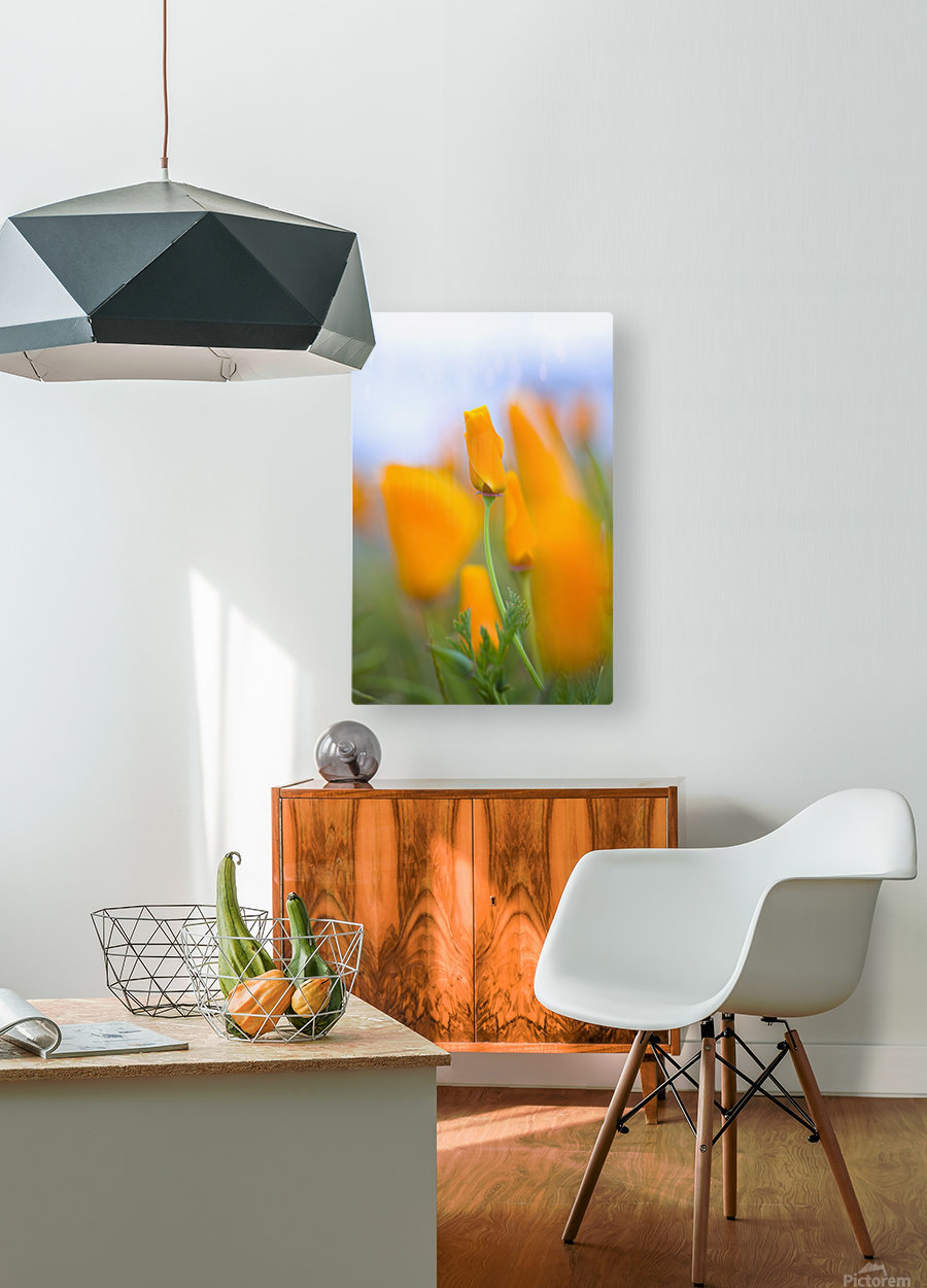 Furled Poppy  HD Metal print with Floating Frame on Back