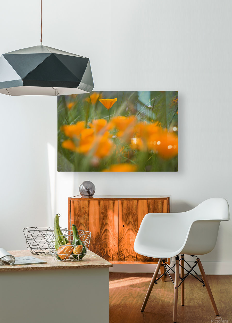 Close Up Of Orange Poppy Flowers  HD Metal print with Floating Frame on Back