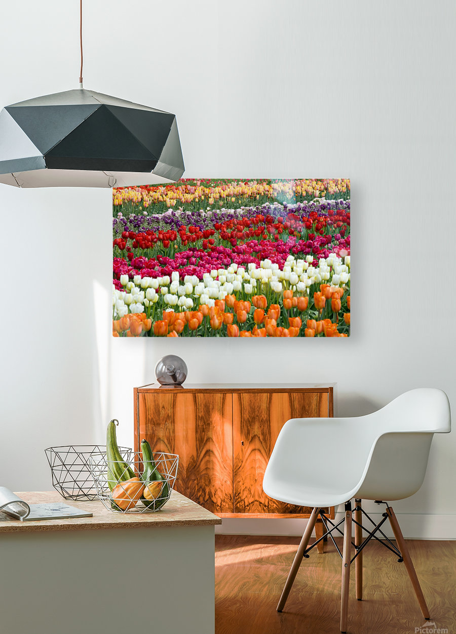 A Tulip Field  HD Metal print with Floating Frame on Back