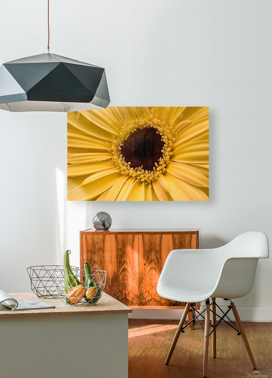 Close Up, Gerbera Daisy  HD Metal print with Floating Frame on Back