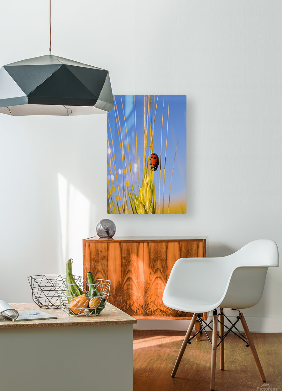 Lady Bug On A Plant  HD Metal print with Floating Frame on Back