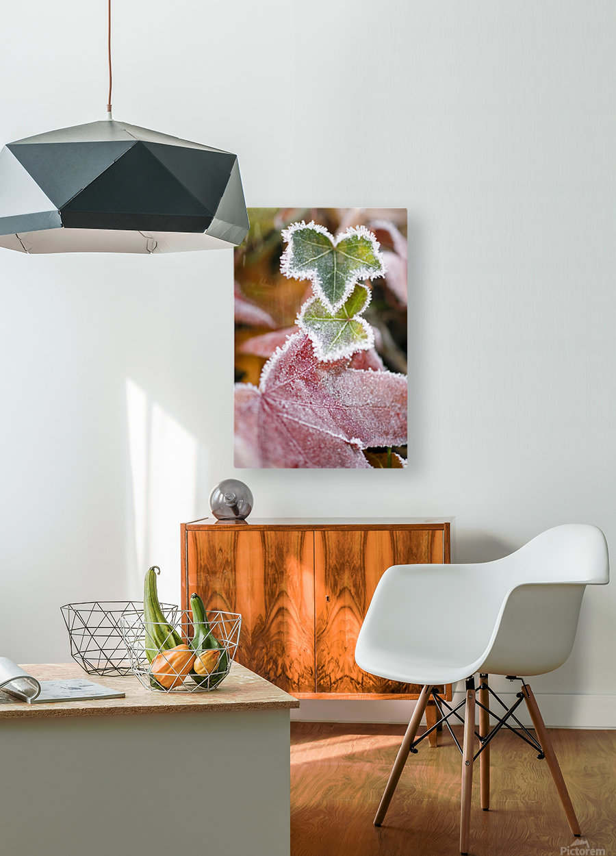 Frost On Autumn Leaves  HD Metal print with Floating Frame on Back