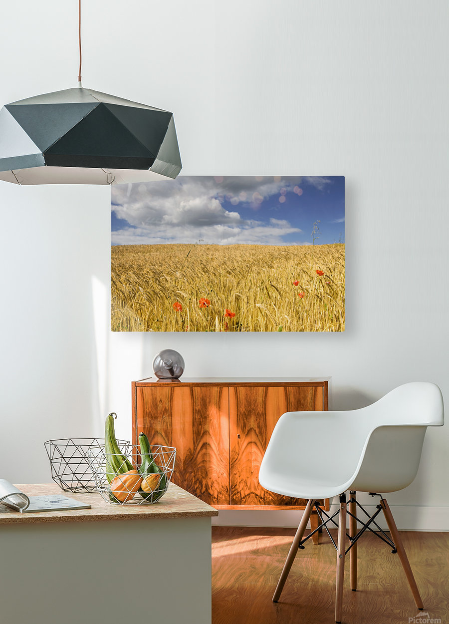 Wild Poppies In Wheat Field, North Yorkshire, England  HD Metal print with Floating Frame on Back