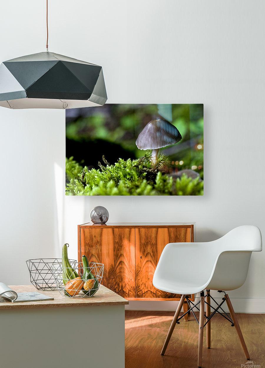 Closeup Of Mushroom  HD Metal print with Floating Frame on Back