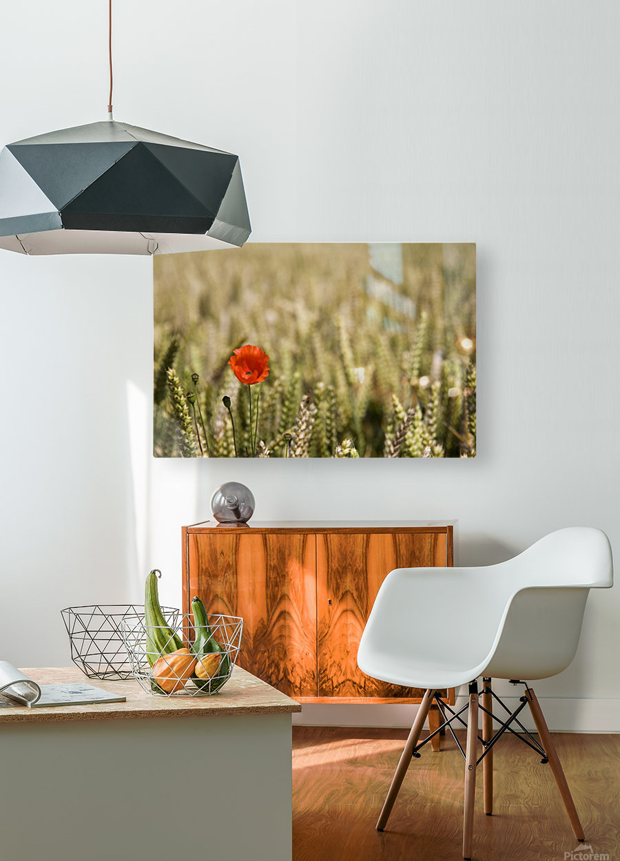 Poppy Flower In Field Of Wheat  HD Metal print with Floating Frame on Back