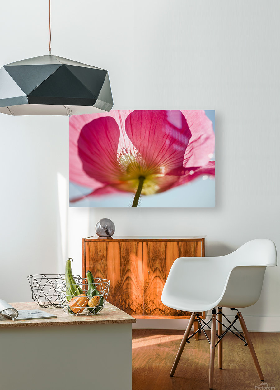 Pink Shirley Poppy  HD Metal print with Floating Frame on Back