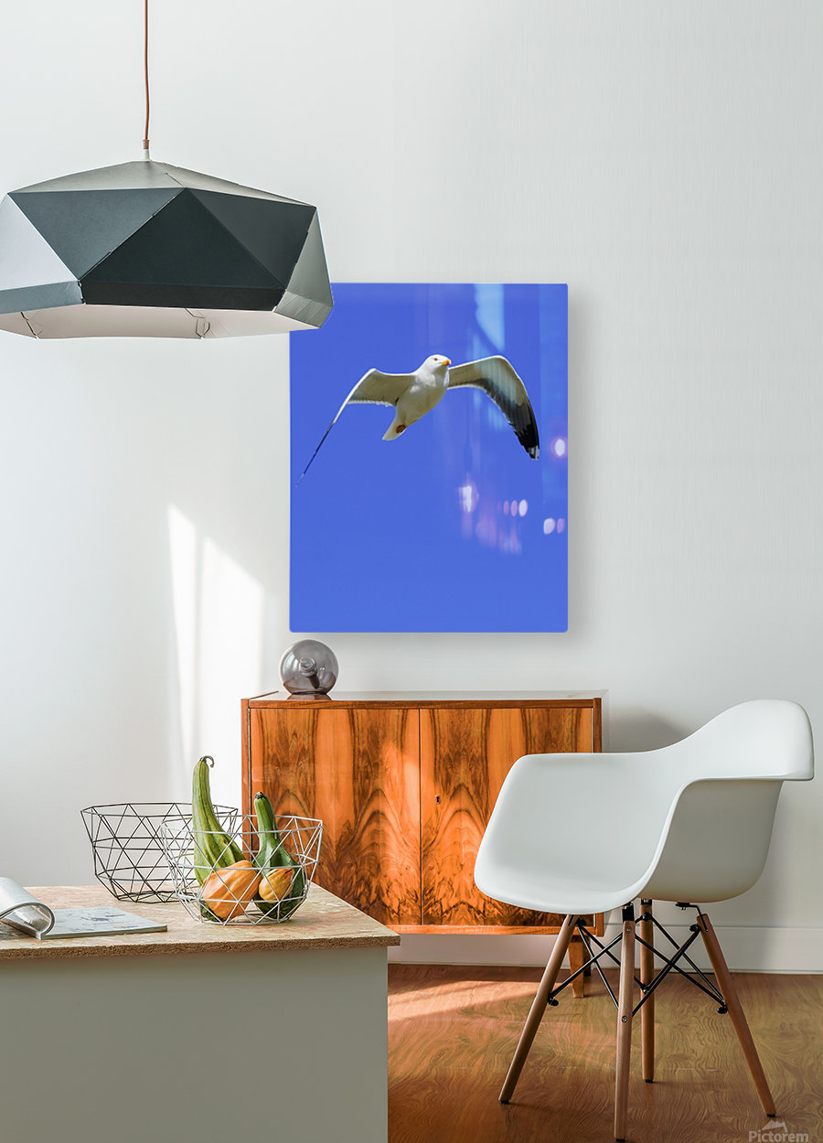 Seagull In Flight  HD Metal print with Floating Frame on Back