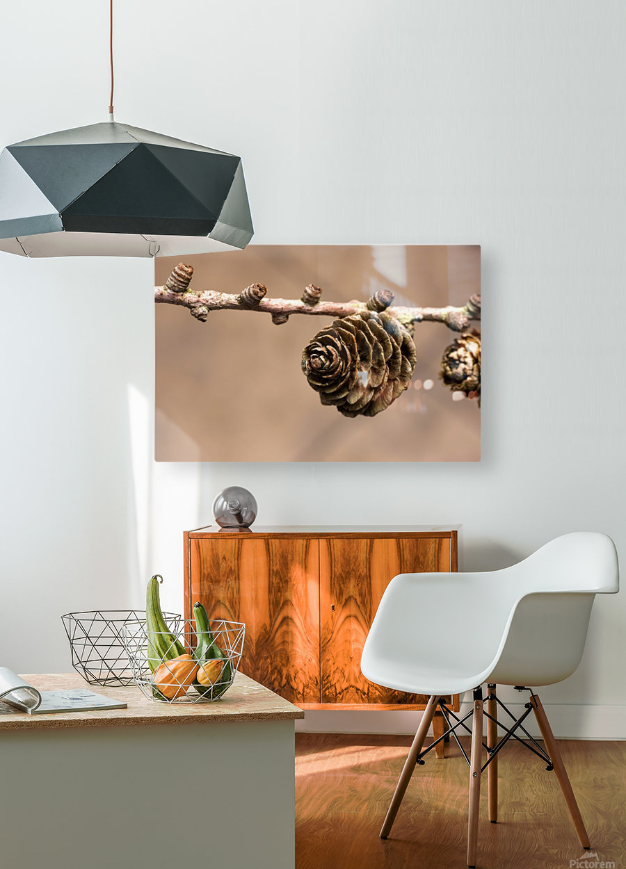 A Conifer Cone On A Tree Branch  HD Metal print with Floating Frame on Back