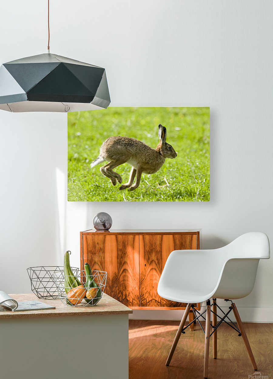Hare Hopping In The Grass  HD Metal print with Floating Frame on Back