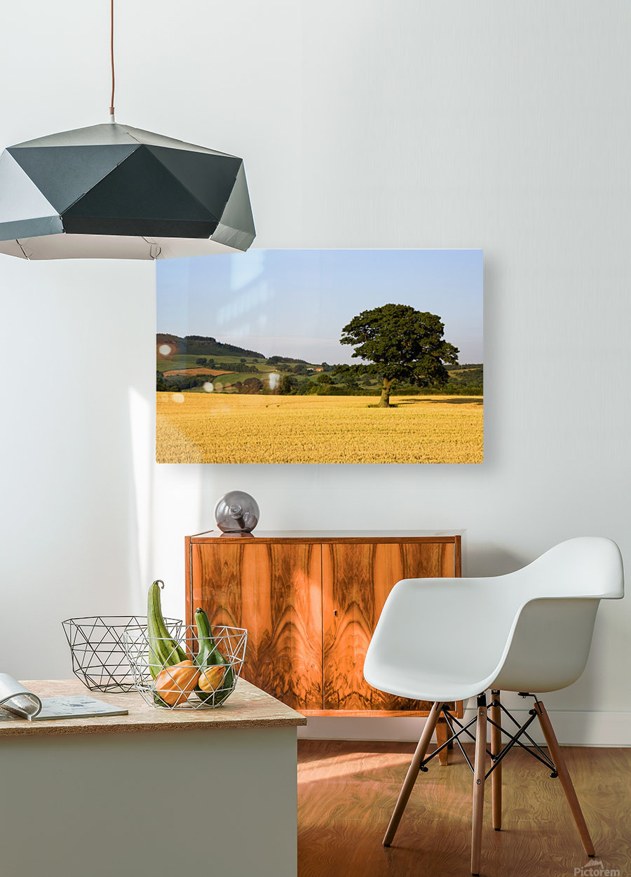 Tree In A Golden Field Of Grain, North Yorkshire, England  HD Metal print with Floating Frame on Back
