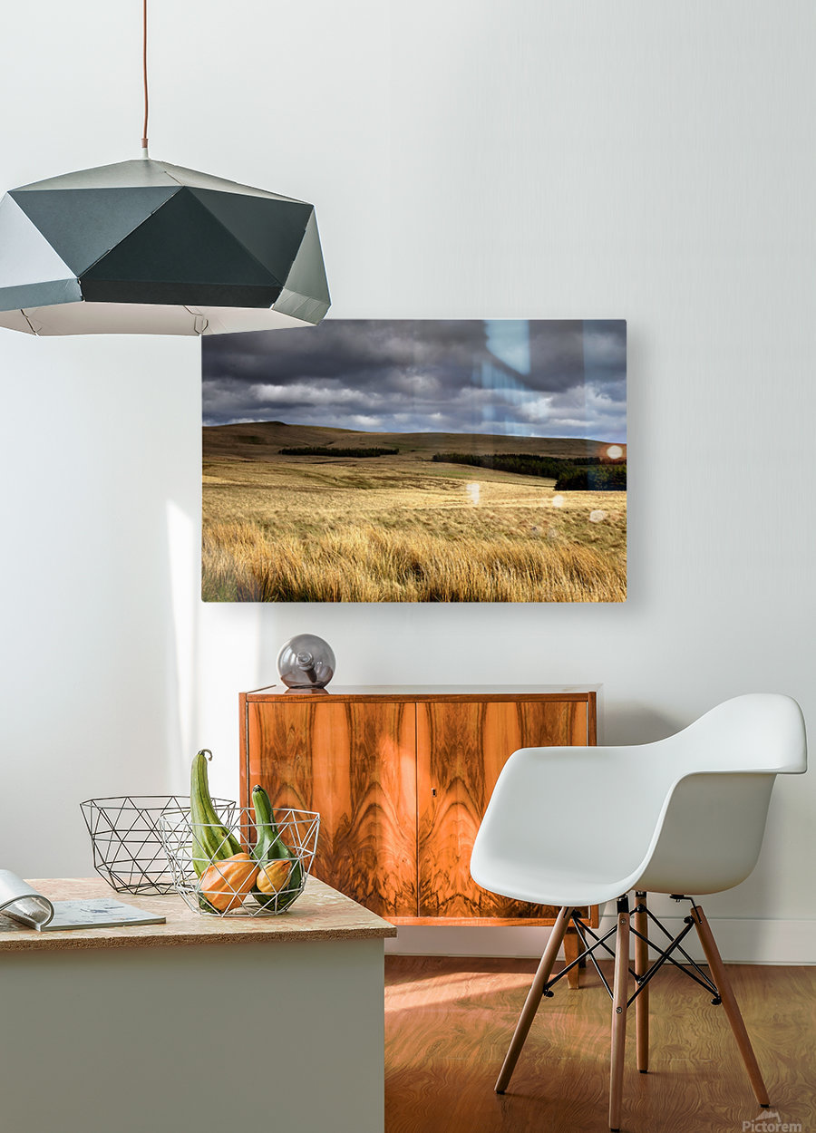 Field Of Wheat With Dark Clouds Overhead, Northumberland, England  HD Metal print with Floating Frame on Back