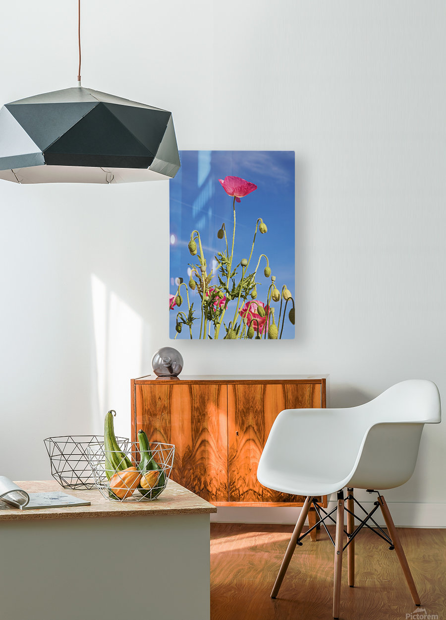Red Flower Against Blue Sky  HD Metal print with Floating Frame on Back